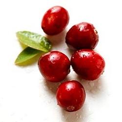 «Молодильная ягода» клюква